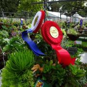 Royal Horticultural Society of Victoria - Hanging Basket Competition
