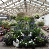 Banksia Nursery